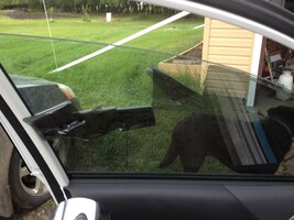 MOBILE WINDOW TINTING KENMORE